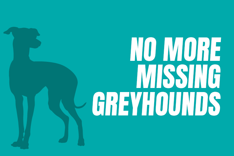 No more missing greyhounds - Abigail Boyd MP