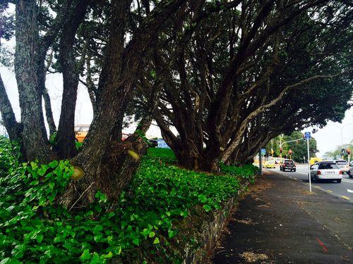 6trees-0-500-0-375.jpg