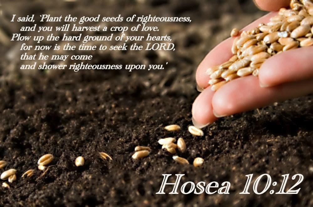 hosea1012.jpg