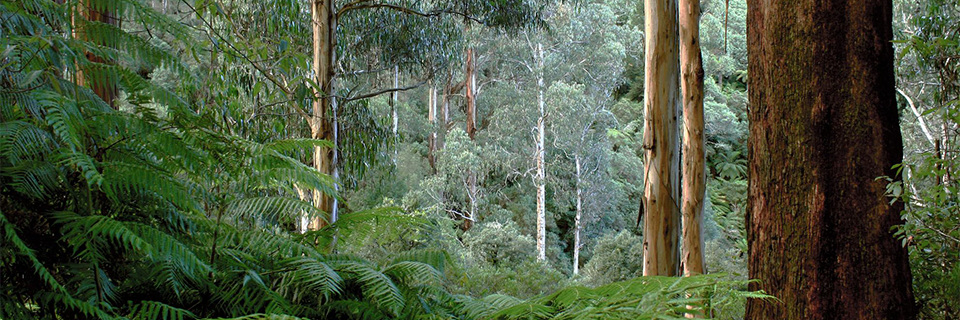 Create a Great Forest National Park