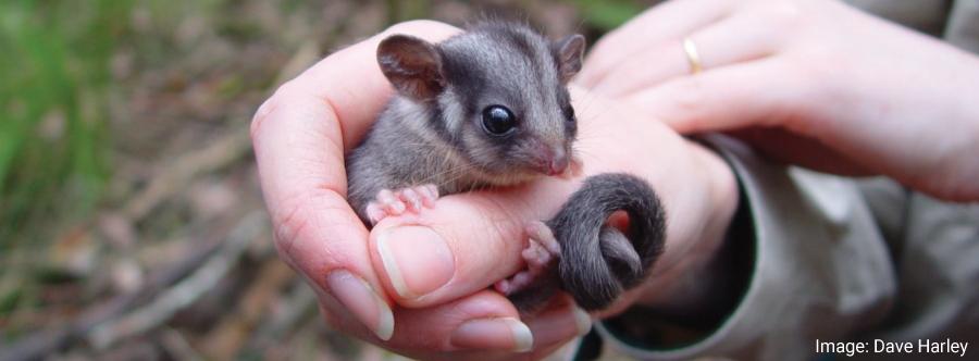 Stop Extinction: Restore Victoria