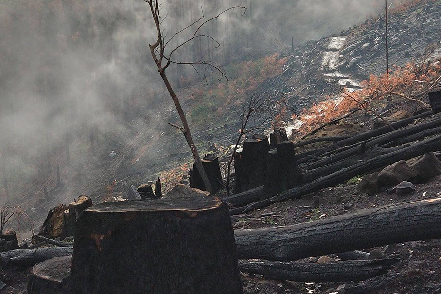 Victoria's native forest continues to be bulldozed and burnt