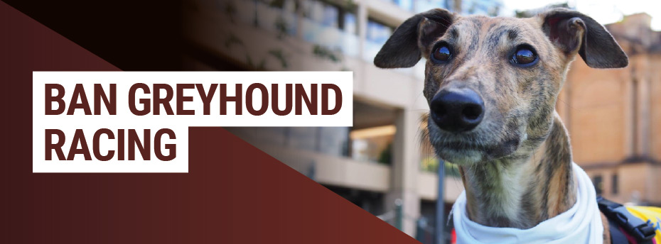Greyhound-header.jpg