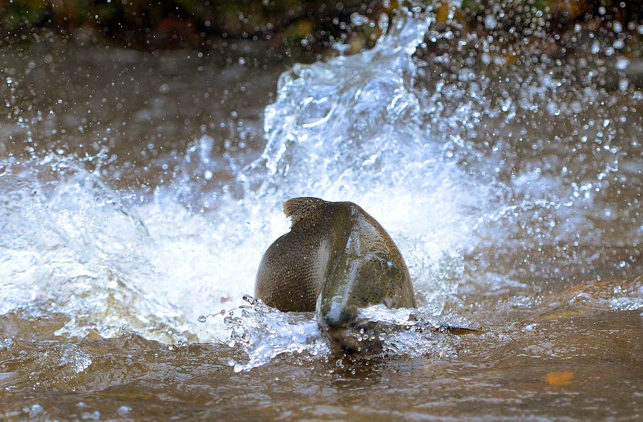 salmon_Barry_Gray_Hamilton_Spectator_email.jpg