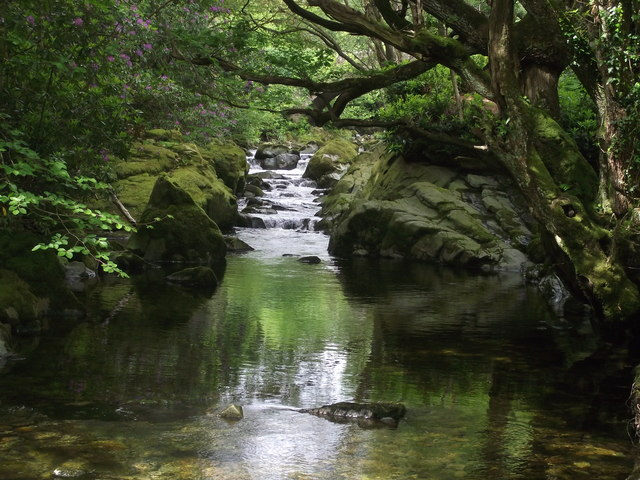 forest-stream-David-Haworth.jpg