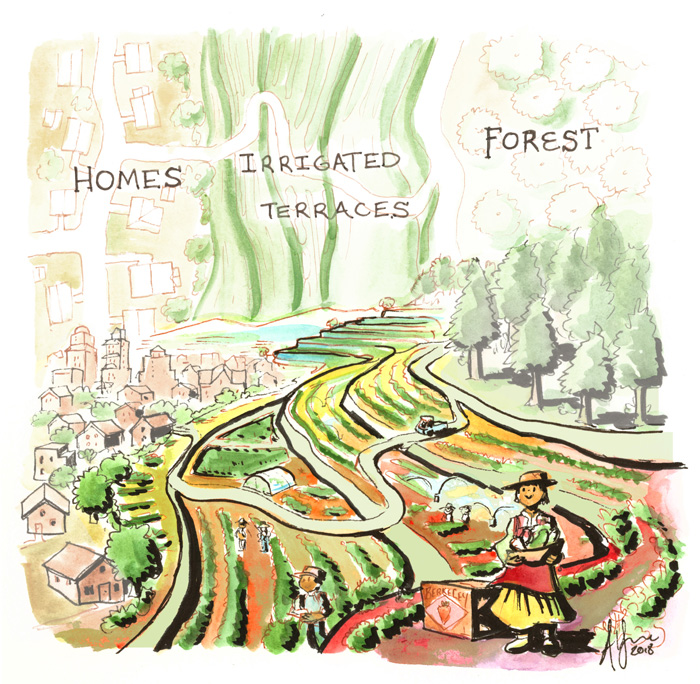 Farm Terraces between homes and forest