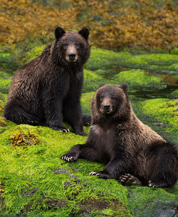 cute_bears.jpg