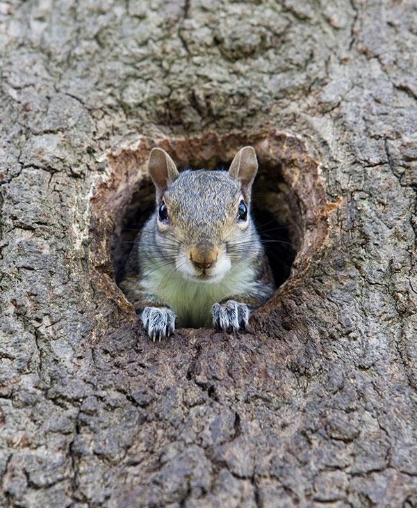 cute_squirrelmom1.jpg