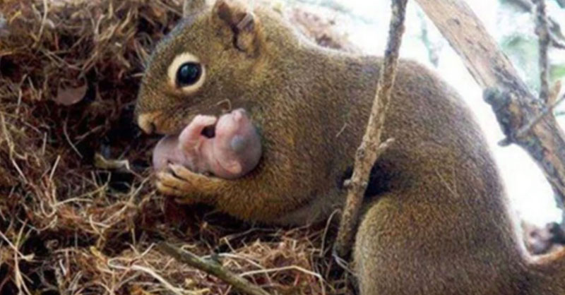 cute_mamasquirrel_THUMB.jpg