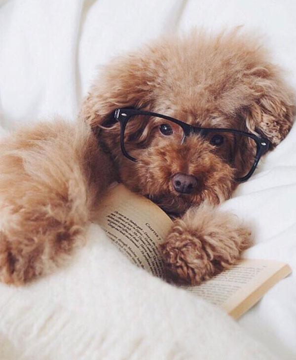 Cute_dog_book.jpg