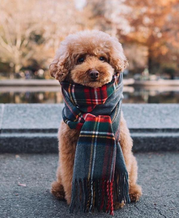 cute_dog_scarf.jpg