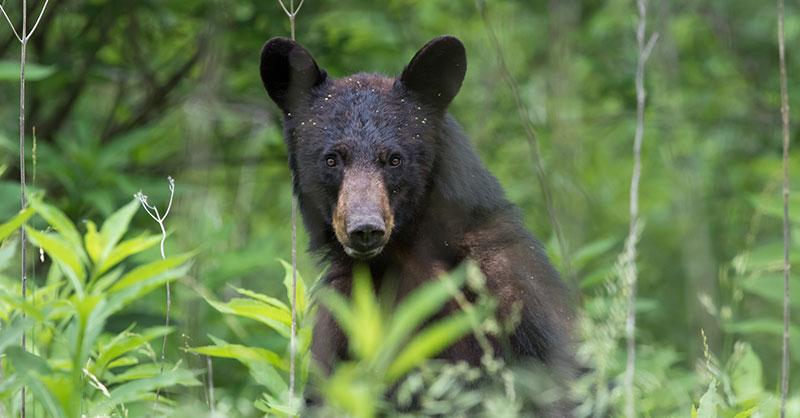 cute_bear_thumb.jpg