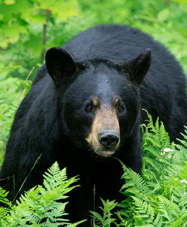 cute_bear_black.jpg
