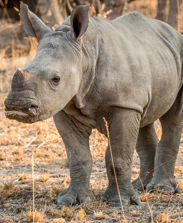 animals-rescue-zoo-wild-rhino-standing.jpg