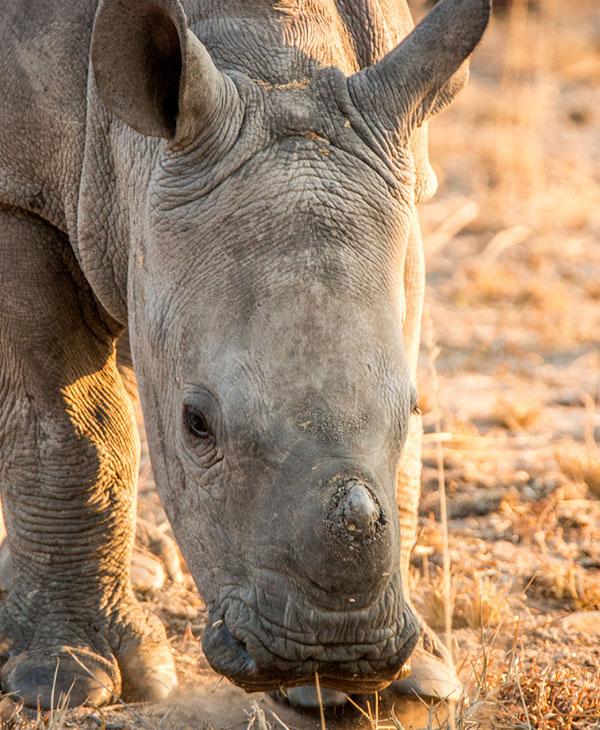 animals-rescue-zoo-wild-rhino.jpg