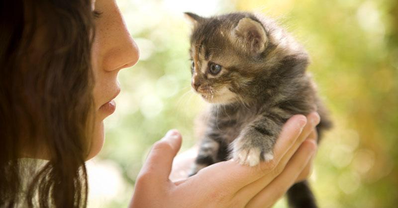 cute_kittenTHUMB.jpg