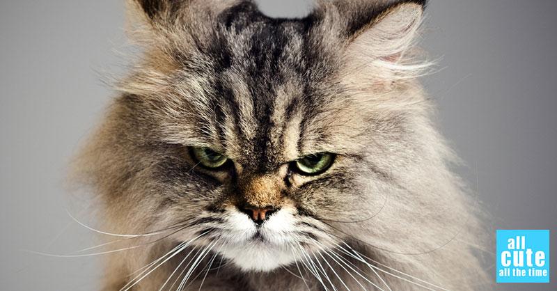 cute-cat-commercial-1thumb.jpg