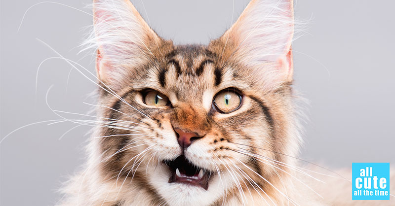 cute-cat-commercial-2.jpg