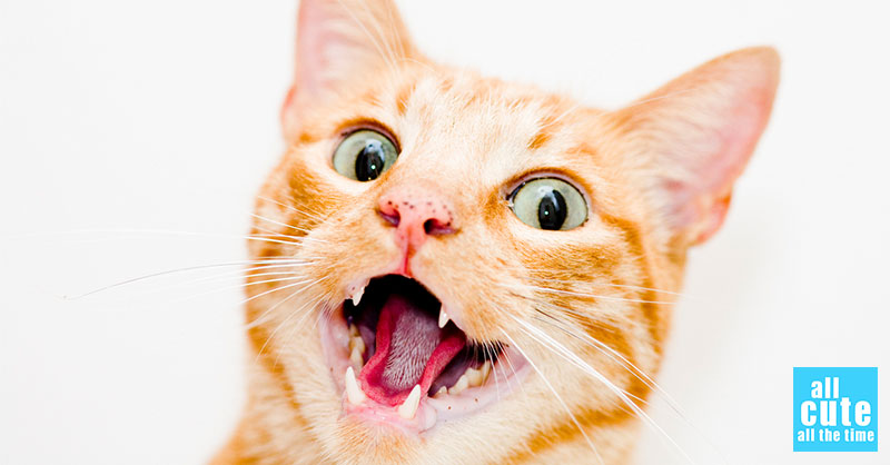 cute-cat-commercial-3.jpg