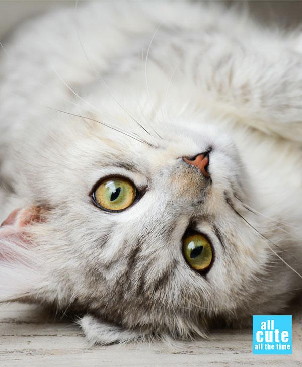 cute-cats-memes-2.jpg