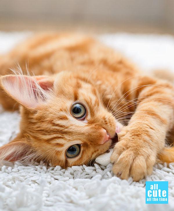cute-cats-memes-3.jpg