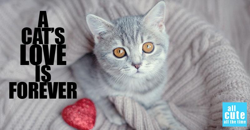 cute-cats-memes-thumb.jpg