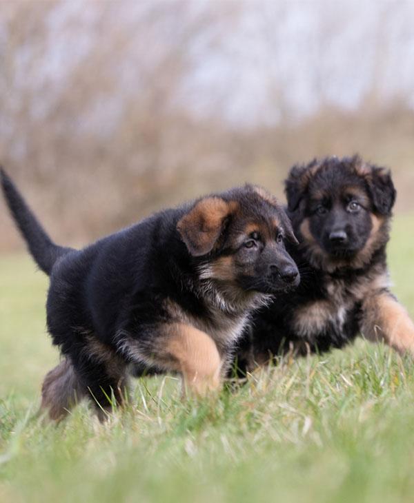 cute-dogs-pets-2.jpg