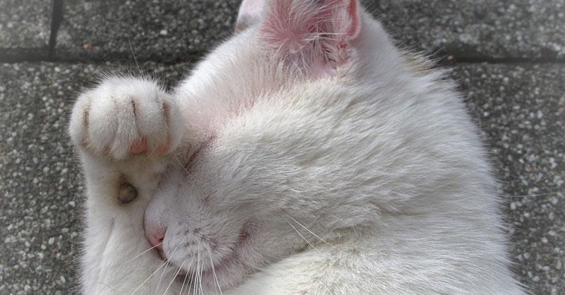 cute-cats-animals-thumb.jpg