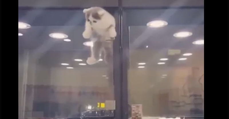 kittyescapeTHUMB.jpg