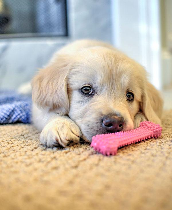 cute-puppy-lemon-2.jpg