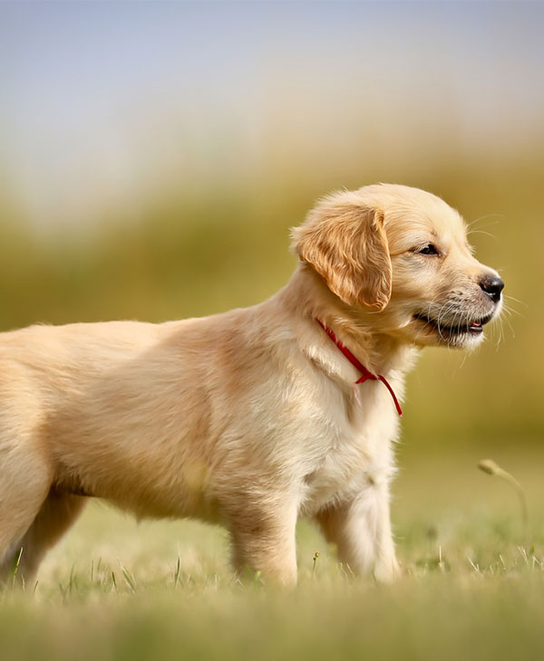 cute-puppy-lemon-3.jpg
