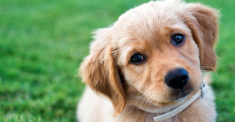 cute-puppy-lemon-THUMB.jpg