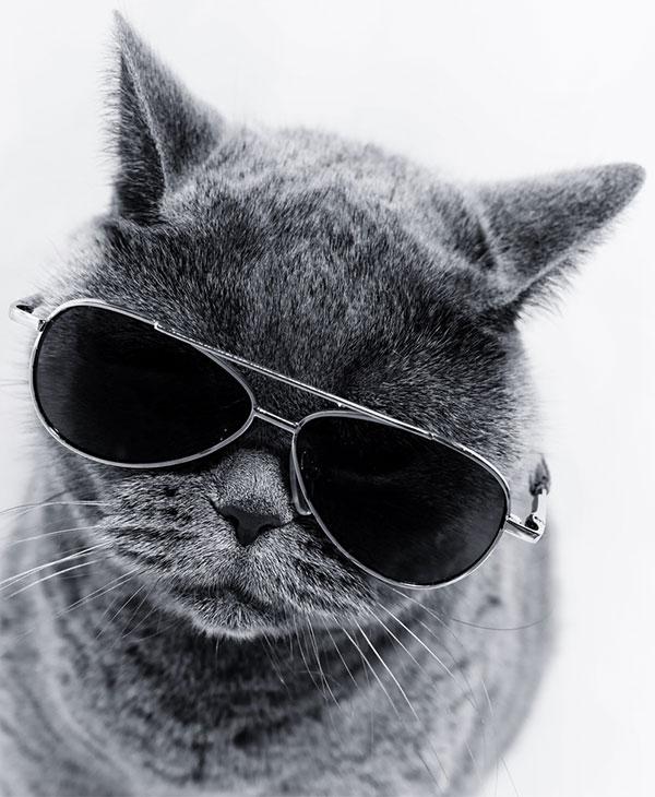 cute-cats-funny-2.jpg