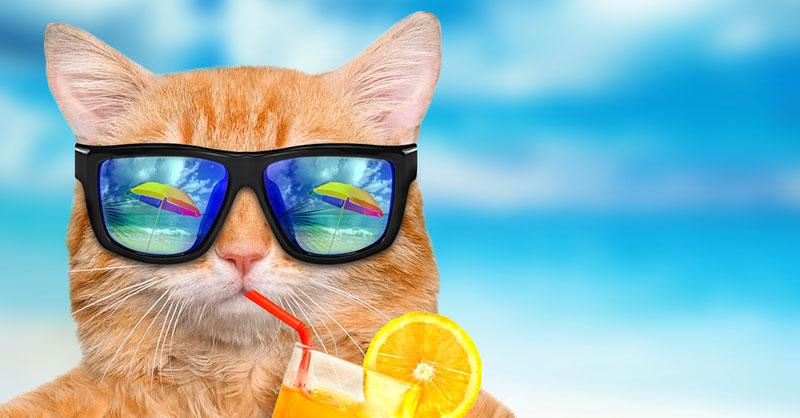 cute-cats-funny-THUMB.jpg