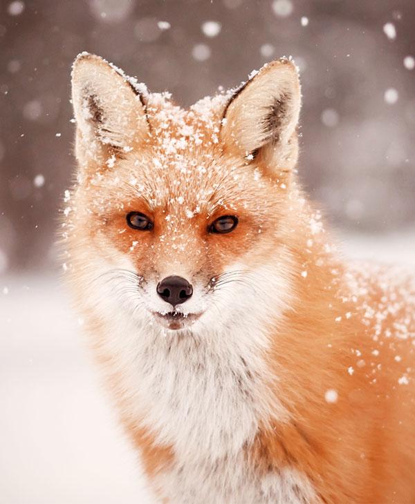 foxtrot2.jpg