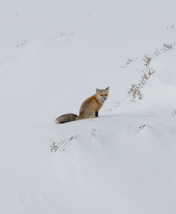 foxtrot3.jpg
