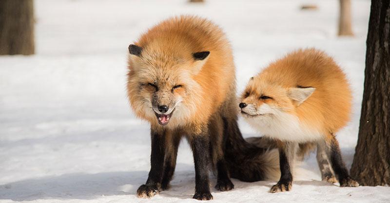 foxtrotTHUMB.jpg