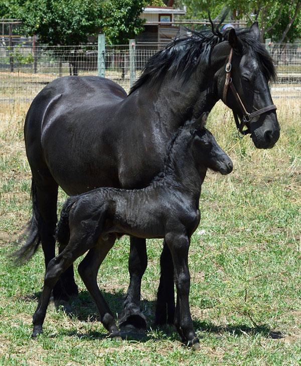 cute-animals-horses-5.jpg