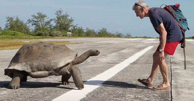 tortoiseTHUMB.jpg