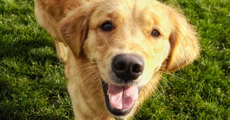 cute-dogs-pets-THUMB.jpg