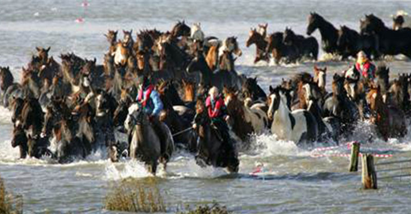 cute_horse-rescue.jpg