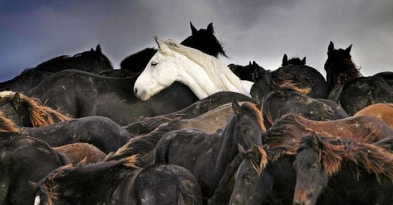 cute_trapped_horses.jpg