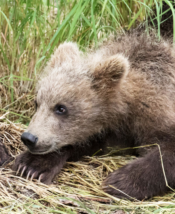 cute-bear-sleeping-2.jpg