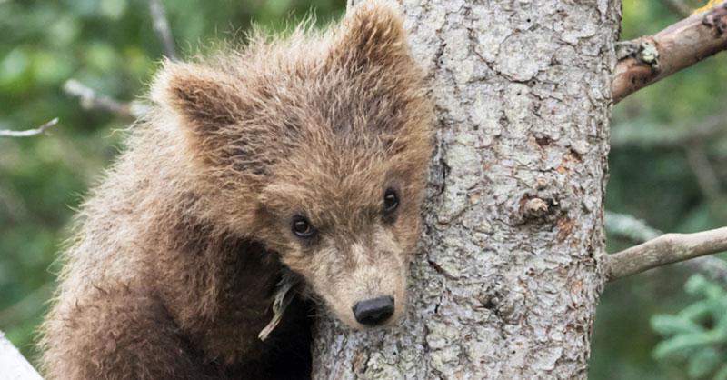 cute-bear-sleeping-THUMB.jpg