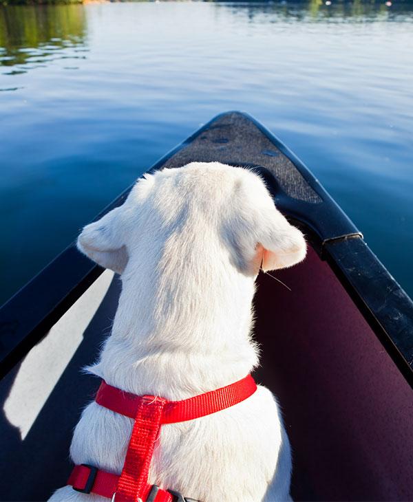 cute_dog_canoe.jpg