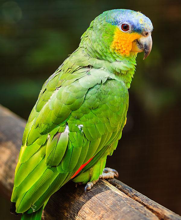 cute_parrotsings2.jpg