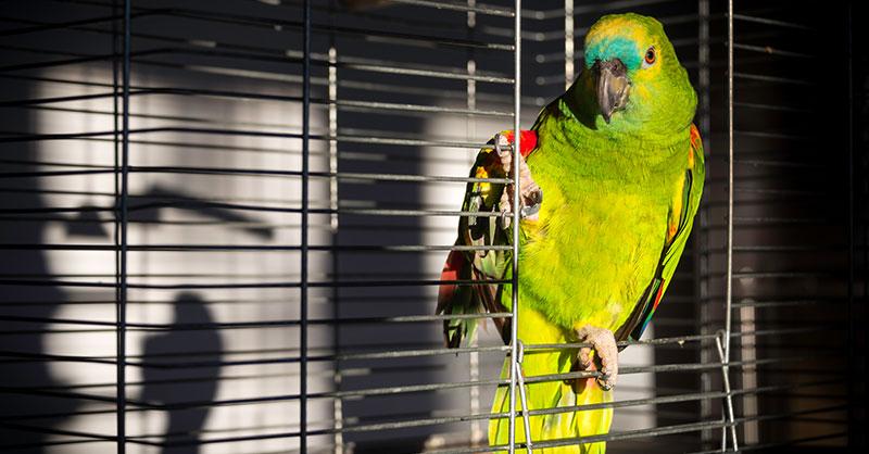cute_parrotsingsTHUMB.jpg