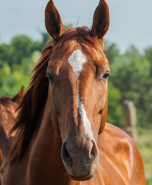 cute_racehorse2.jpg