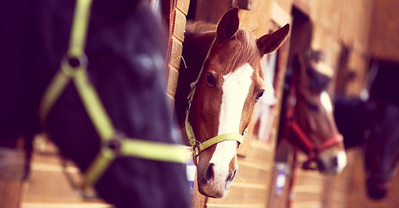 cute_racehorseTHUMB.jpg