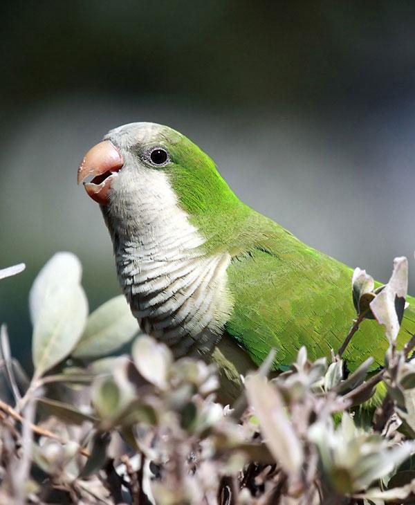 cute-animals-birds-2.jpg